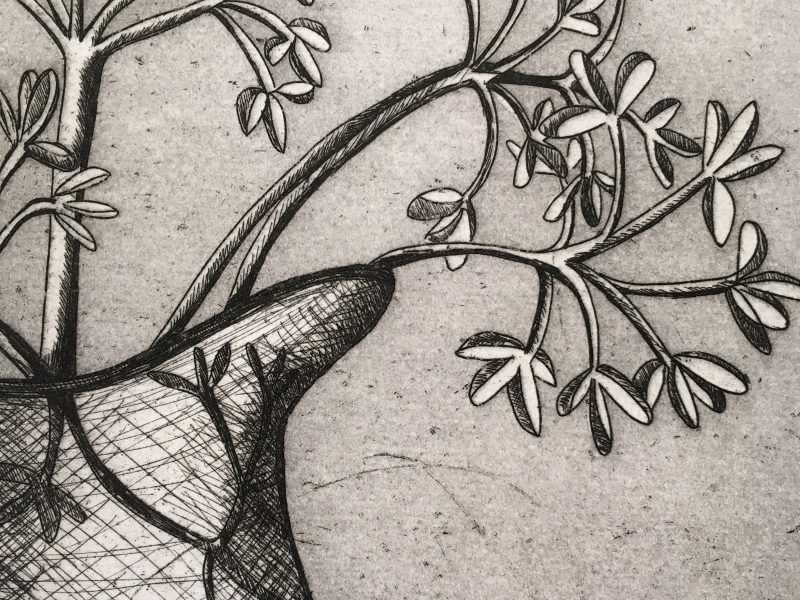 Etching and Aquatint – Dried Flowers in a Jug