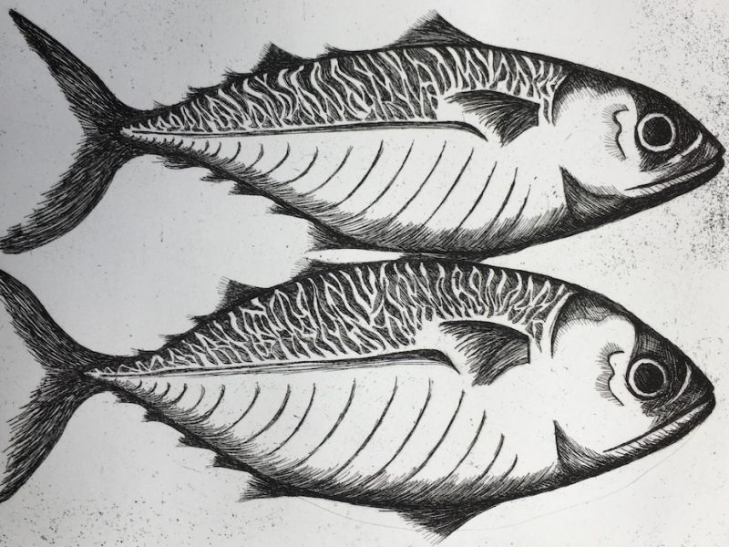 Mackerel etching & aquatint
