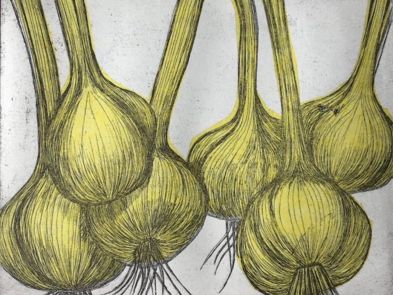 Garlic with their stems – etching