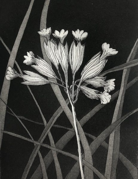 Cowslips Etching & Aquatint